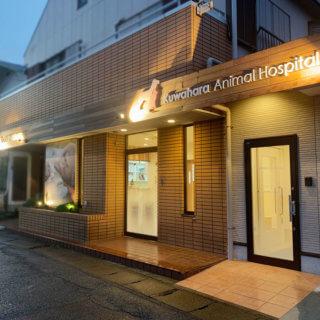 千葉県柏市布施 動物病院 看板